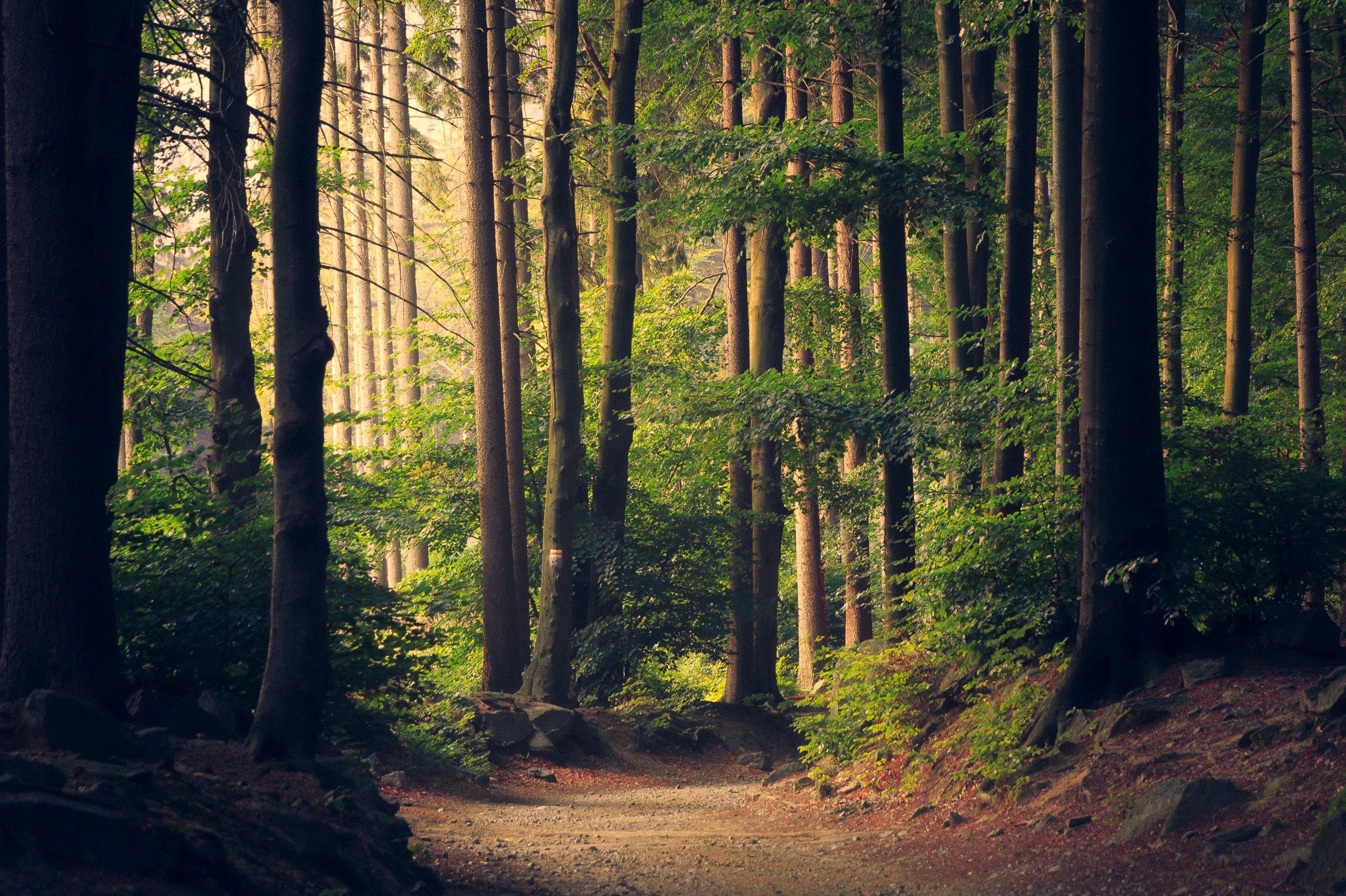 June Trail Meet Up