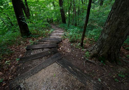 Wildcat Den Trail